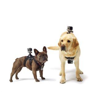 Kamera Hundegeschirr